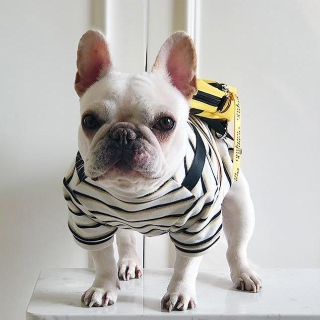 hypebeast dog clothes