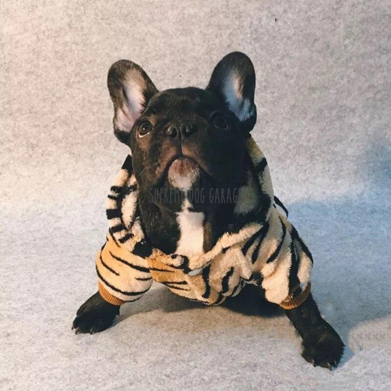 frenchie halloween costume