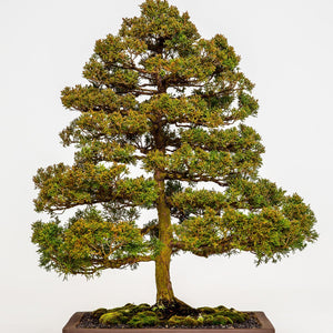 Bonsai Workshop - Masterclass