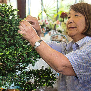 Bonsai Course - Intermediate & Advanced