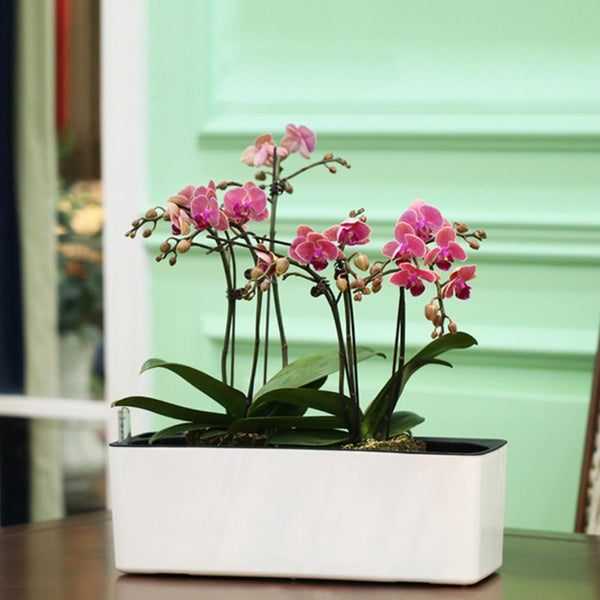 Maple - Indoor Self-Watering Flower Planter