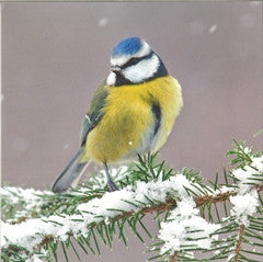 Blue Tit Christmas Cards (153mm x 153mm)