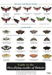 Day-flying Moths