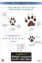 British Mammal Tracks & Signs
