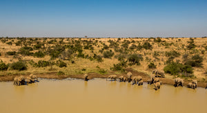 Elephants at the Watering Hole by Ethan Tucker