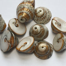 Load image into Gallery viewer, Brown/Gold Cone Shell, Top Drilled, 7-10 x 15 mm - 11 Beads
