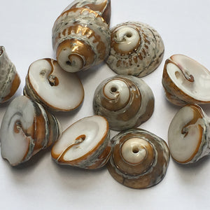 Brown/Gold Cone Shell, Top Drilled, 7-10 x 15 mm - 11 Beads