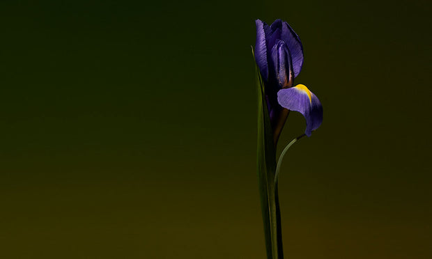 Iris Shot Sample
