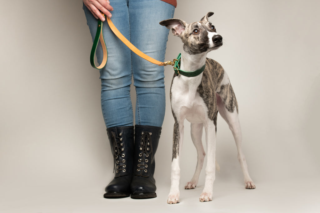 Artisan Dog Lead and Collar in Forest Green