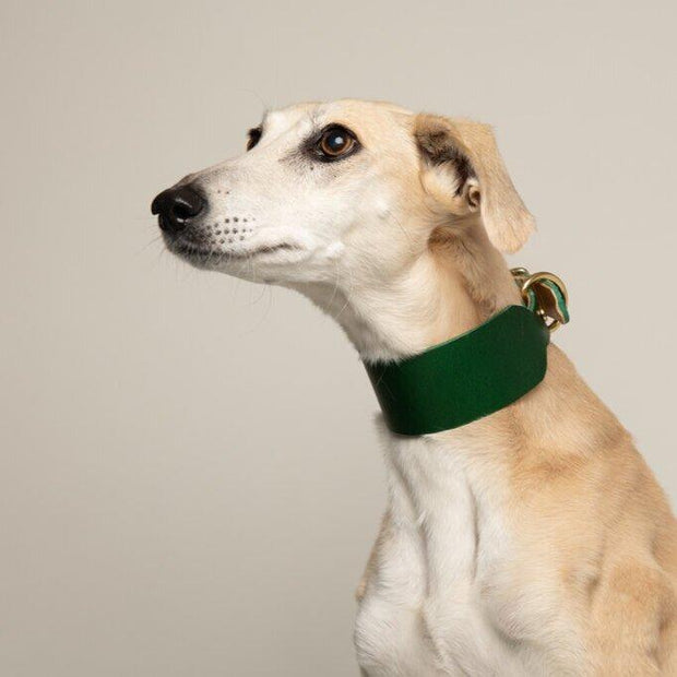 Seldom Found Forest Green Artisan Sighthound collar Kaufmann Mercantile