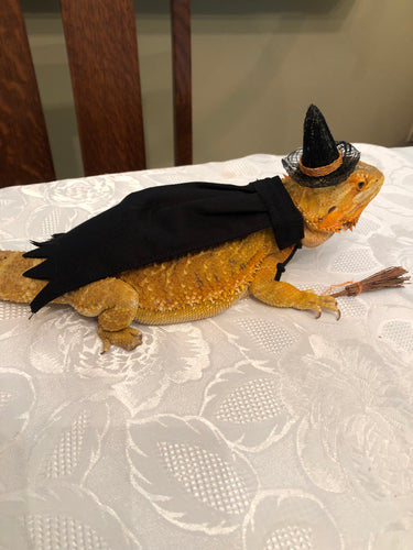 Witches outfit costume