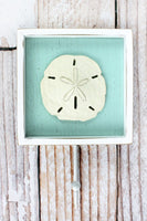 9.25 x 6 Sand Dollar Framed Wood Wall Hook