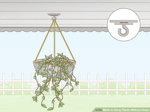 How to Hang Plants Without Holes