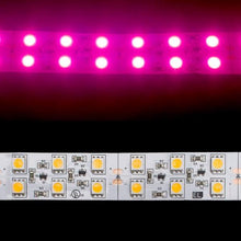 Load image into Gallery viewer, Environmental Lights Pink 5050 Double Row CurrentControl LED Strip Light, 120/m, 20mm wide, Sample Kit from OnSetLighting.com