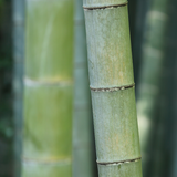 bamboo forest bokeh