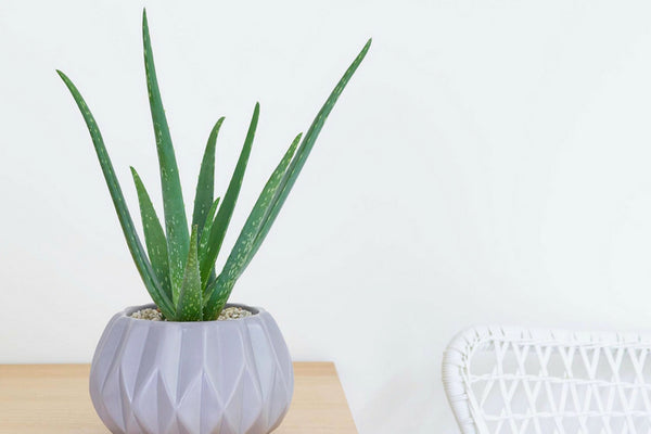 Houseplants You Can Actually Take Care of