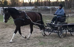 Carriage Driving in the Cold?
