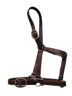 Nose Buckle Halters & Leads