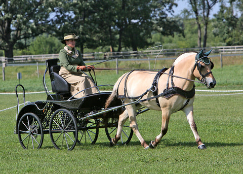 Bobcat Marathon Carriage | Midwest Custom Carriages