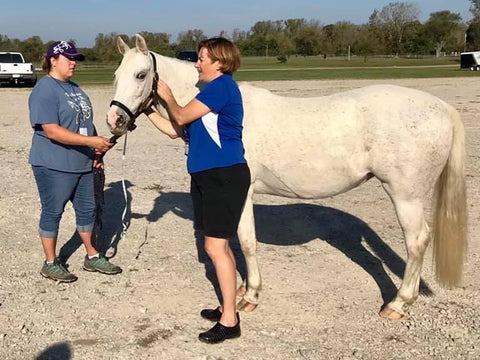 Measure a Horse for a Harness   IVC Carriage