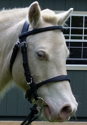 Miniature Horse Open Bridle