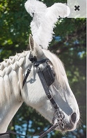 Ostrich Feather Horse Bridle Plume