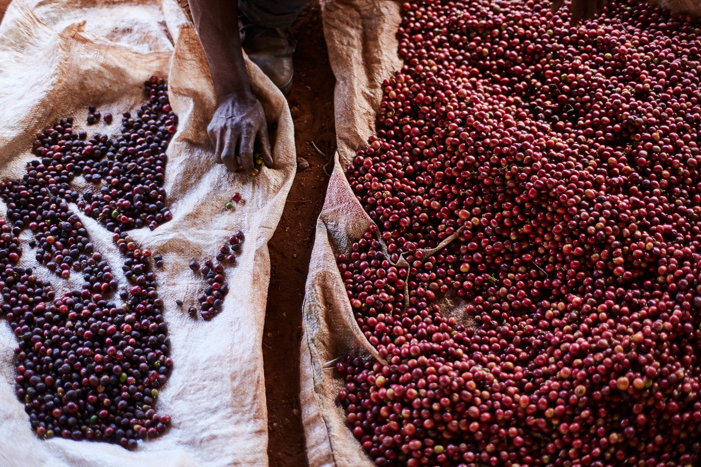 Kunywa Jasho Langu: Coffee Kenya / Mounted Photographic Print