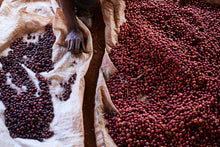 Load image into Gallery viewer, Kunywa Jasho Langu: Coffee Kenya / Mounted Photographic Print