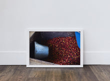 Load image into Gallery viewer, Coffee Cherries for Pulping