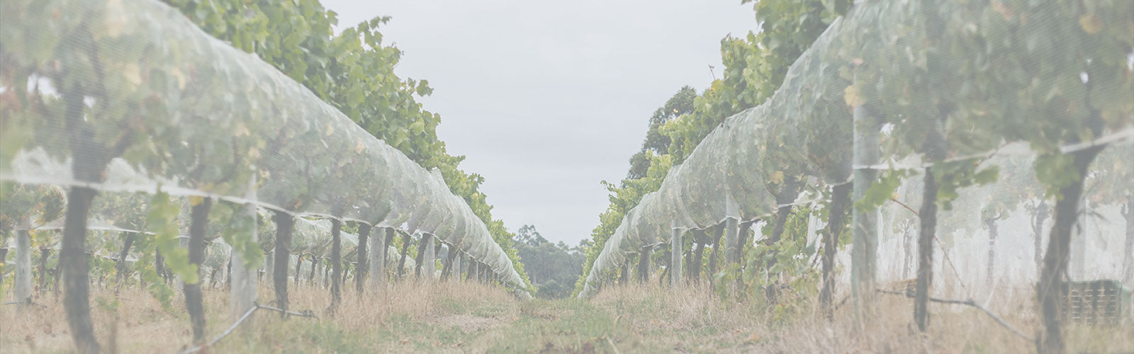 Silverstream Wines