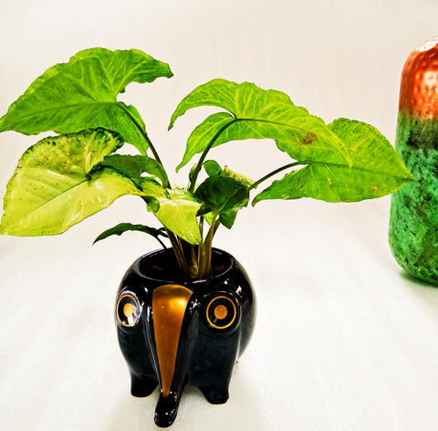 Ceramic Indoor Planter For Garden | Handmade Black Ceramic Elephant Planter For Home