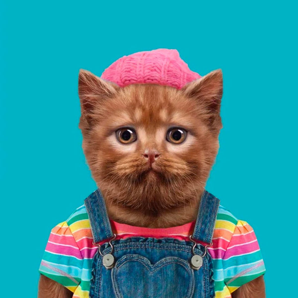 Zoo Portraits Poster of Abby, the British Shorthair Cat. Cat wearing dungarees and bright pink hat