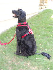Dog Harness | Stitchpet | Red on Red