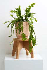 Cork Plant Stand - usa.capradesigns