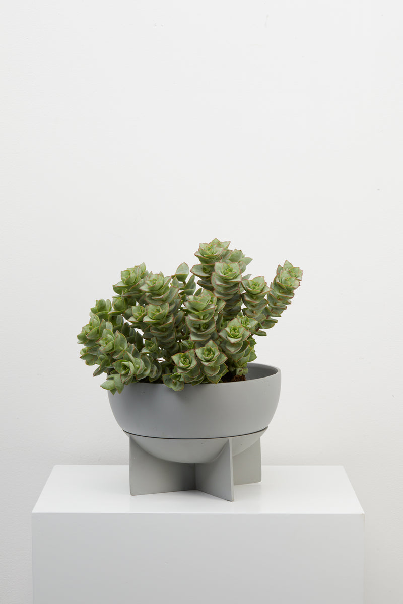 Dome Eros Planter - usa - capradesigns