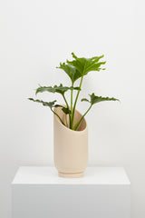 Small Summit Planter - usa - capradesigns