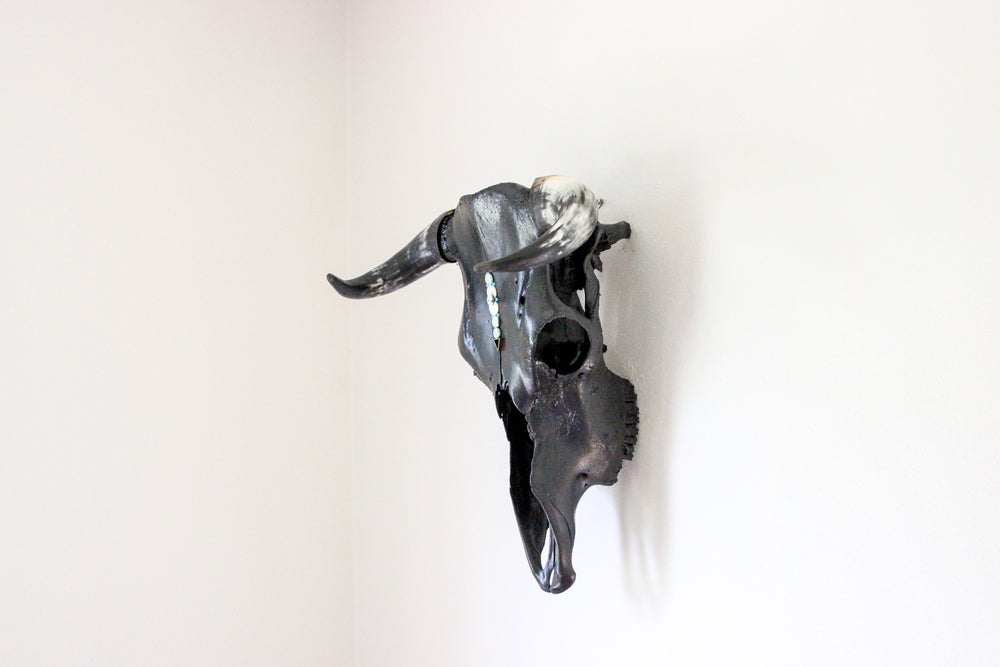 The Blue on Black Steer Skull