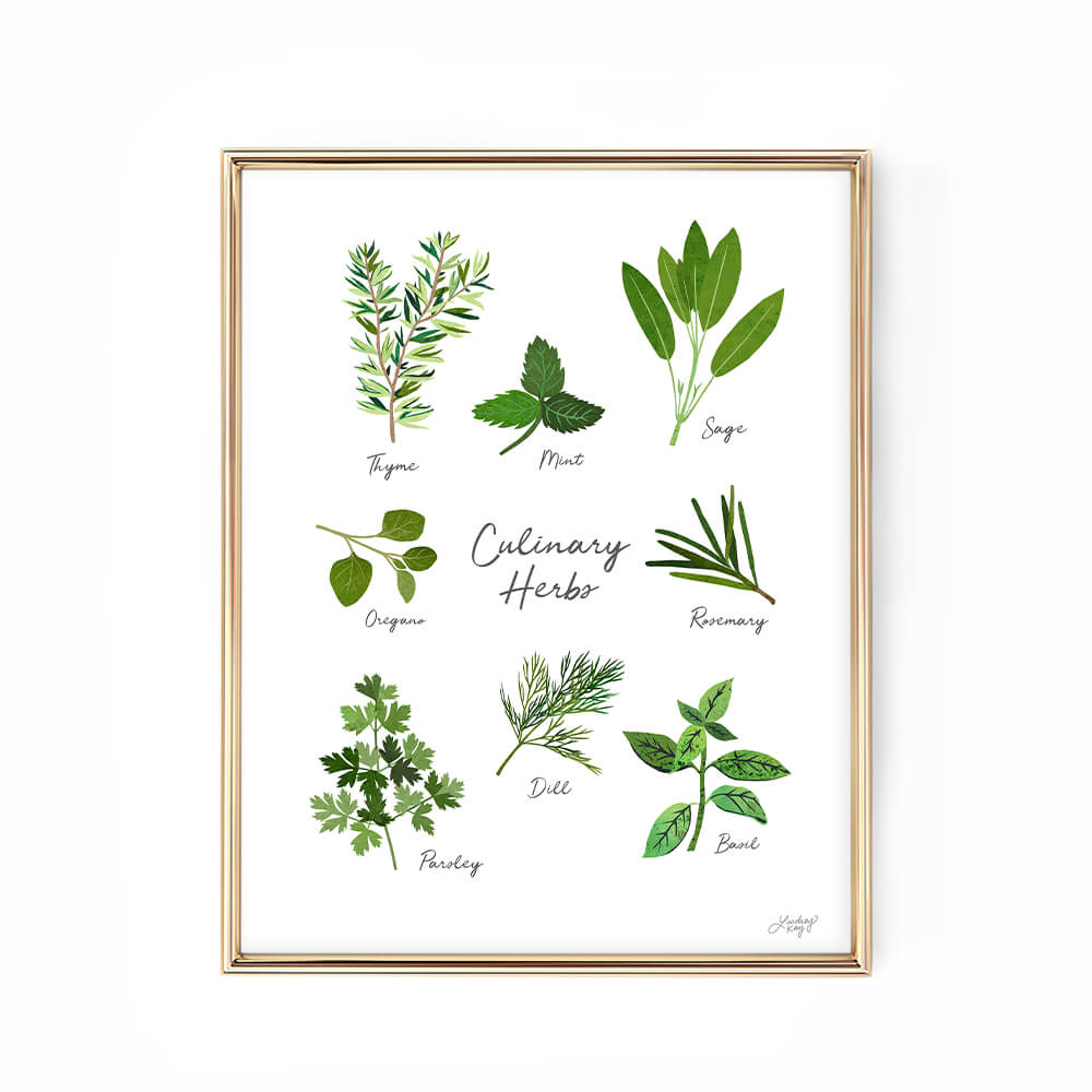 culinary herbs art priint illustration kittchen decor lindsey kay collective