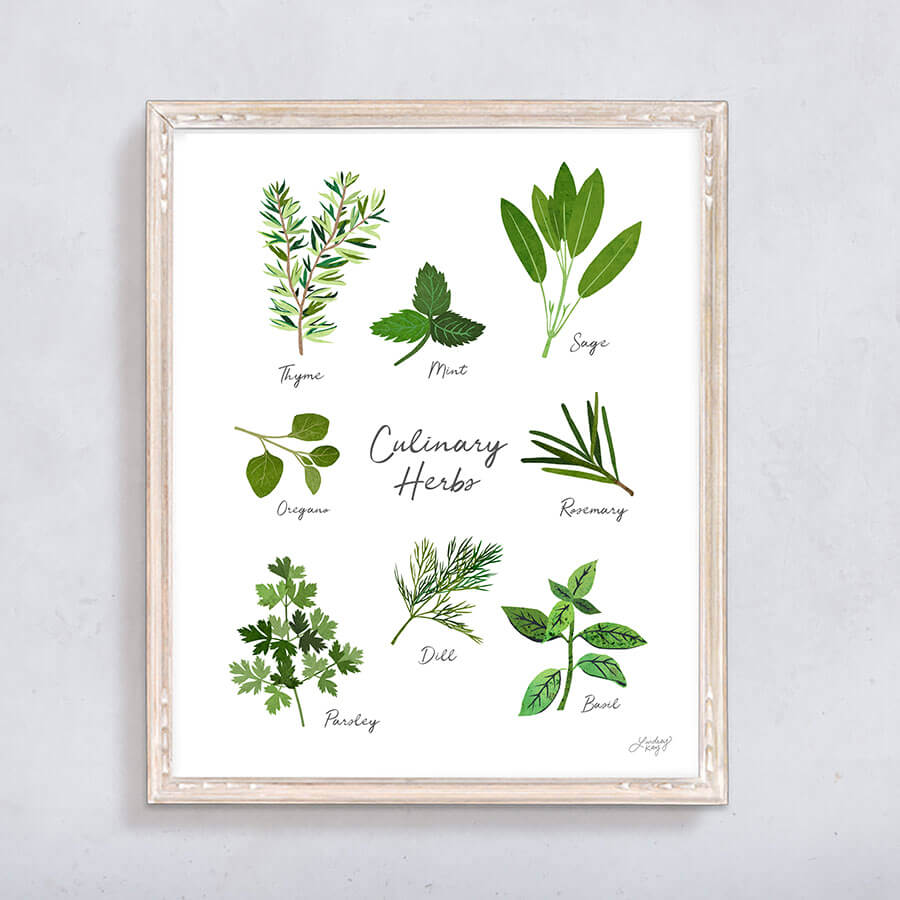 herbs, illustration, herbs art print, wall art, herbs design, lindsey kay co