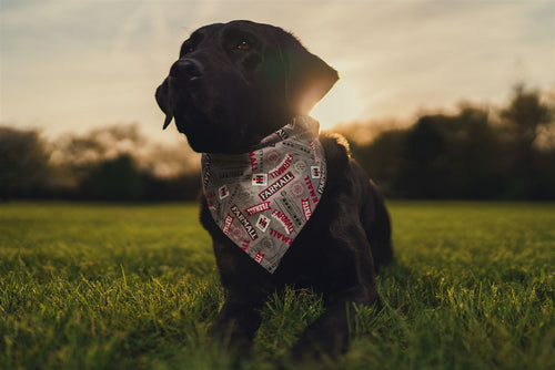 Farmall and IH Logo Dog Bandanna, gray