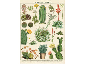 Cacti and Succulents, single sheet, gift wrap