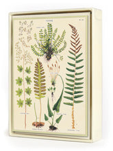 Ferns Boxed Note Set