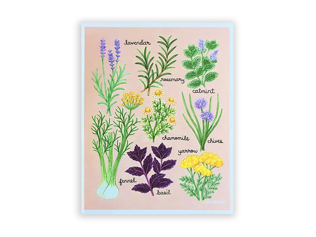 Illustrated Herbs Art Print, 8x10in