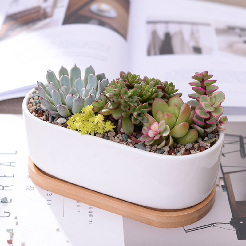 Minimalist Large Oval Planter With Tray