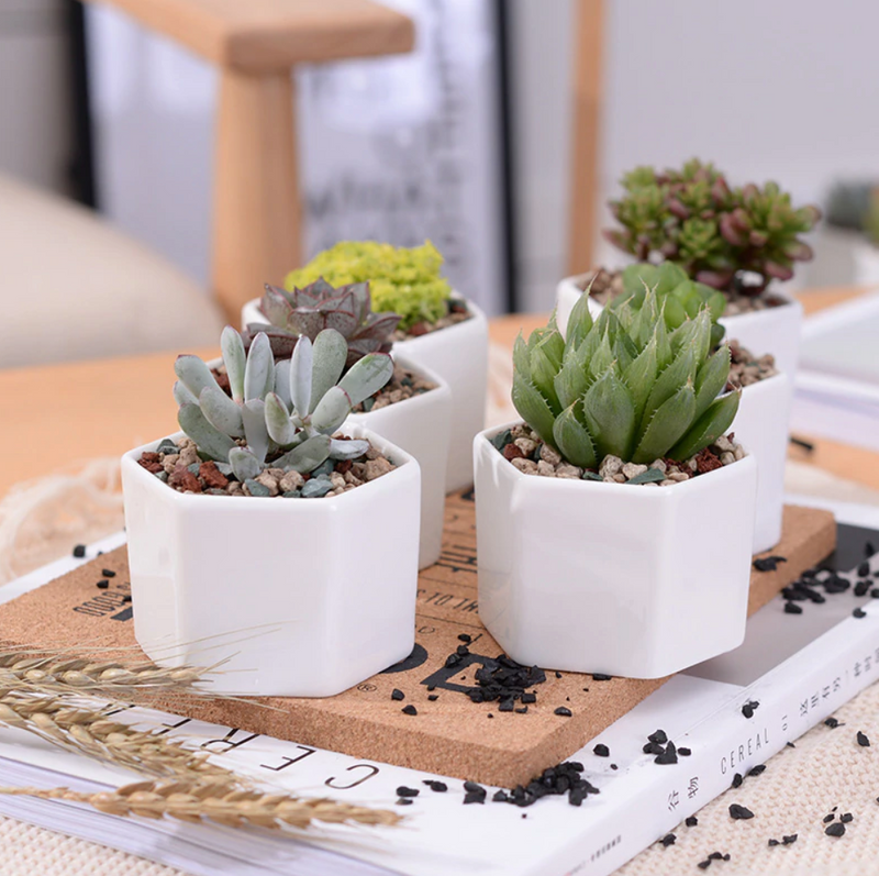 Minimalist Hexagon Planters With Tray Set/4