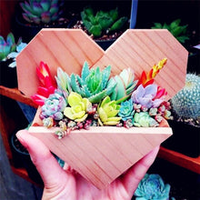 Load image into Gallery viewer, Exotic Mini Succulent Cactus