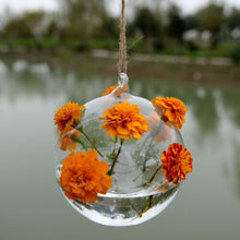 Load image into Gallery viewer, Transparent  Hanging Flower Vase