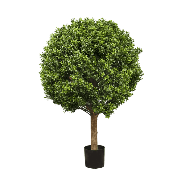 Boxwood Ball Tree - 60cm