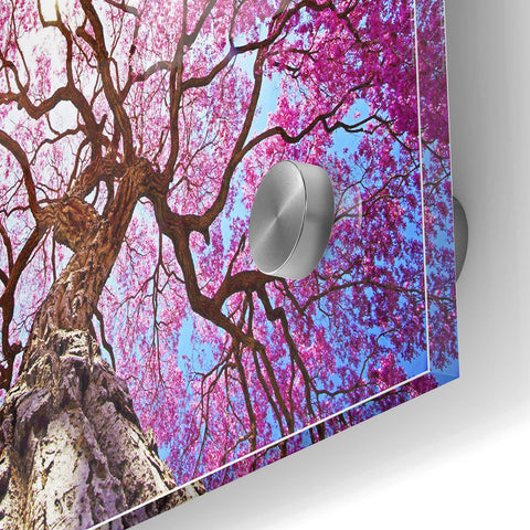 Epic Art 'Thing of Beauty' Acrylic Glass Wall Art