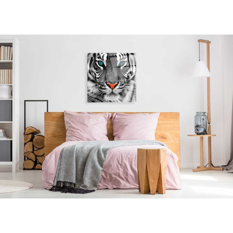 Epic Art 'Thrill of the Tiger' Acrylic Glass Wall Art